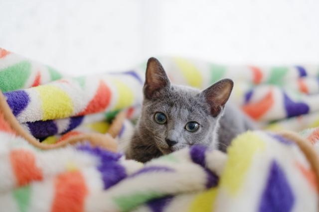 毛布とねこ